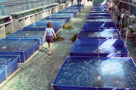 Finantari pentru piscicultura