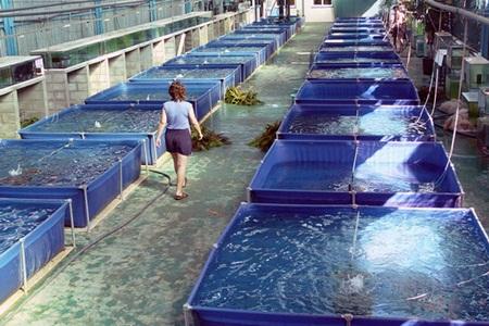 accesare fonduri piscicultura
